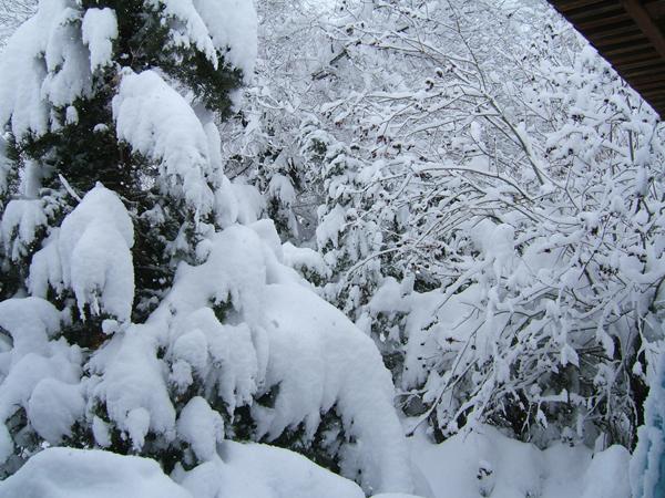 My Winter Backyard