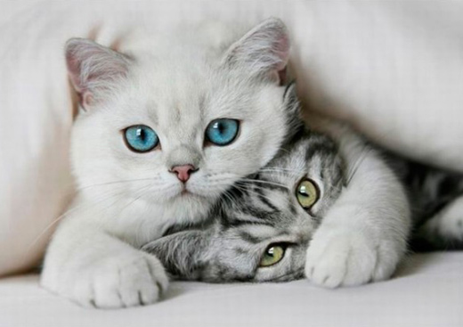 Two Cute Kitties