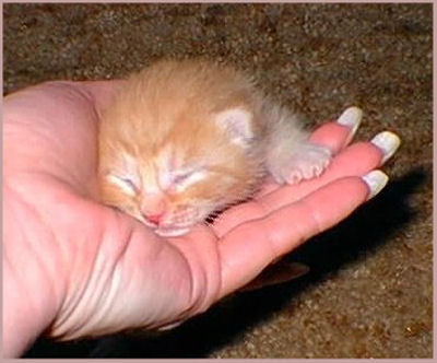 newborn kitty