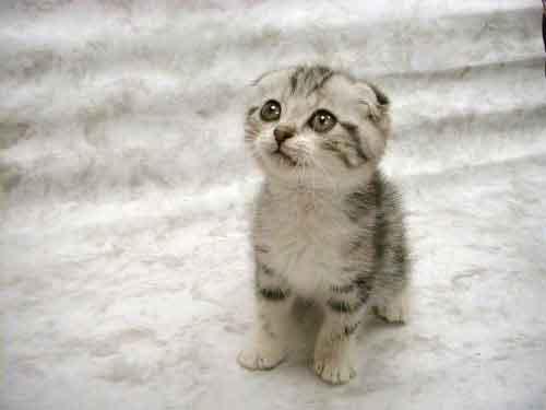 kitten weak hind legs